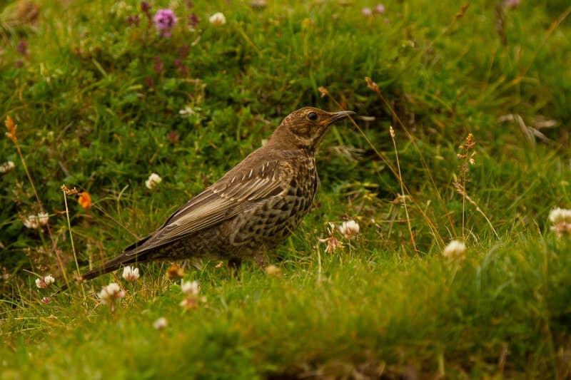 Hedge Cutting & Bird Nesting Season Laws