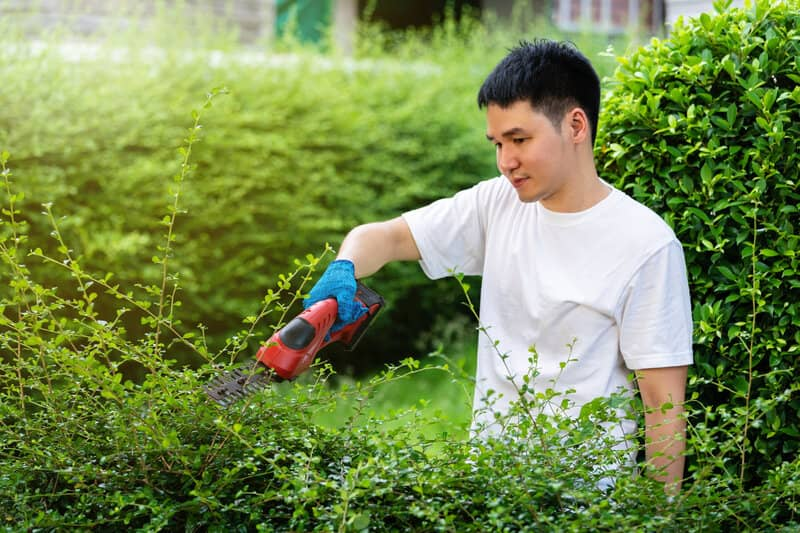 How Do You Maintain a Healthy Hedge (2) (1)
