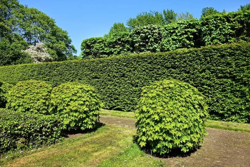 How to Move a Hedge or Bush in Your Garden