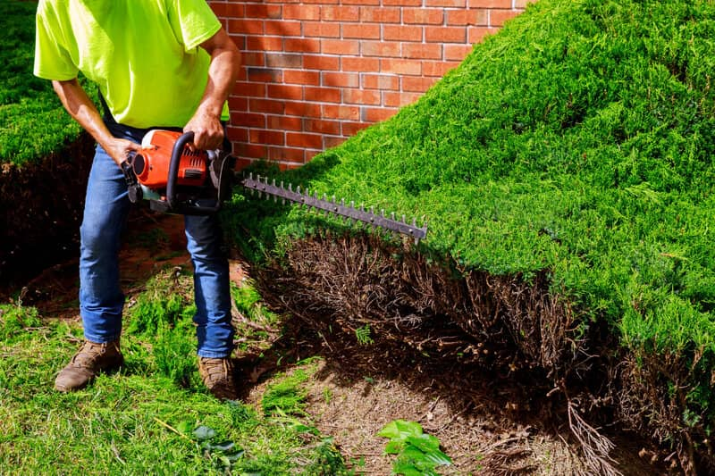 What Can You Do With a Hedge Trimmer