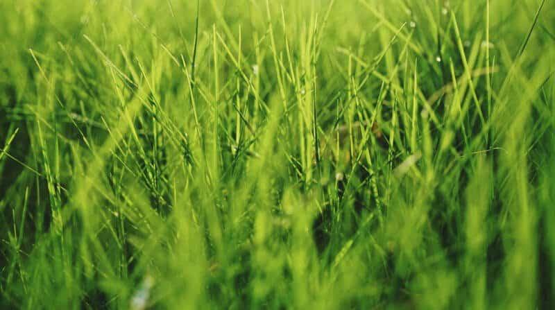 cutting-long-grass[1]