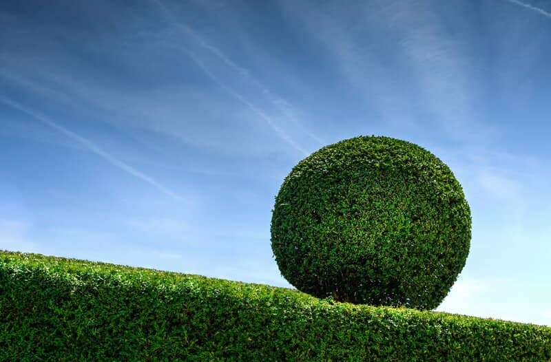 how To Trim Hedges Into Shapes