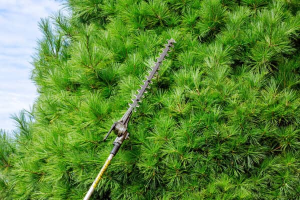 pole saw as hedge trimmer
